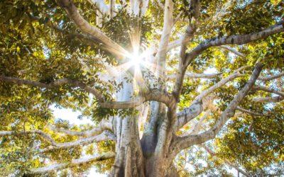 Pocahontas et l'arbre de vie
